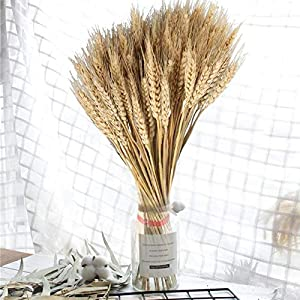 100PCS Dry Grass Bouquet Decoration Wedding Craft Props High Simulation-2 Bunch,Artificial Flower,Stalk,Wheat,Naturally Dried Flowers for Home Party Decorations 5
