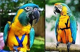 The AVIATOR El Arnés de Aves: Grande Verde: Amazon.es: Productos ...