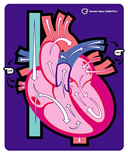 American Educational Human Heart Walk-Thru Mat, 60