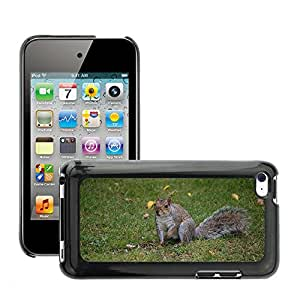 Hot Style Cell Phone PC Hard Case Cover // M00133771 Squirrel Grey Animal Park Wildlife // Apple ipod Touch 4 4G 4th