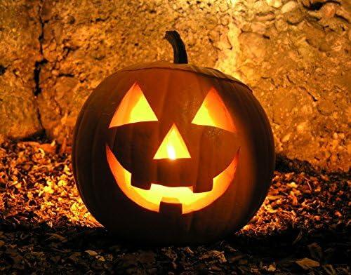 Immagini Zucca Di Halloween.Zucca Di Halloween Nr 20 Semi Amazon It Giardino E Giardinaggio