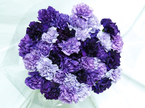 140 Fresh-cut Mixed Purple Carnations (advance ordering recommended) by The Purple Garden