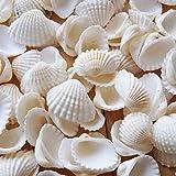 Small Tiny Sea Shells White Clam Bulk Natural Seashell for DIY Craft Home Decor Vase Fillers…