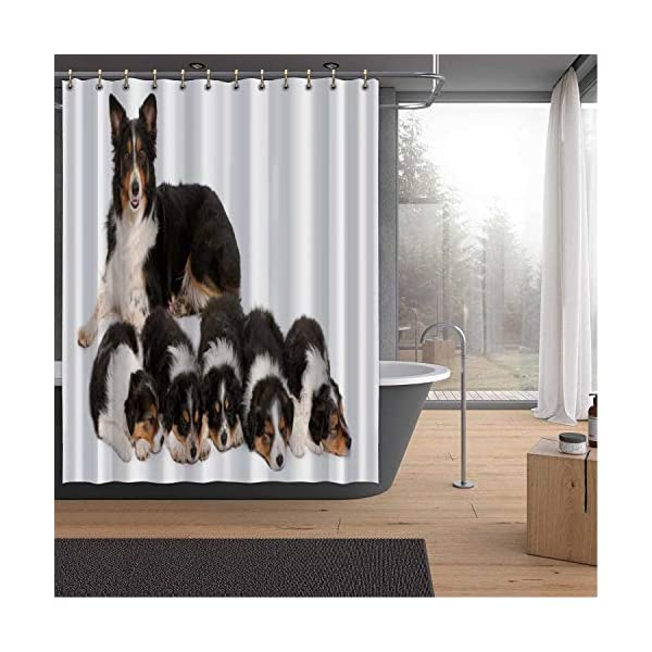 ALUONI Female Border Collie Shower Curtains Set with Hooks,3 Years Old for Shower,59''W x 71''H 1