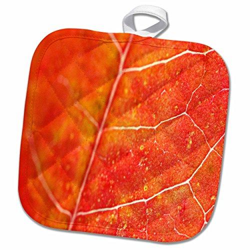 3dRose Yves Creations Colorful Leaves - Orange Leaf - 8x8 Potholder (phl_36747_1)