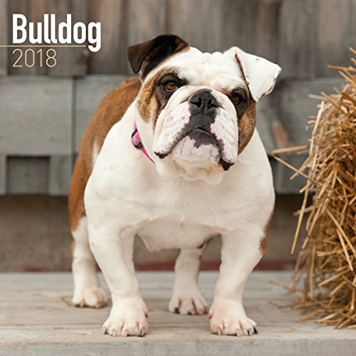 Turner Licensing Photographic Bulldogs 2018 Wall Calendar  (18998940009)