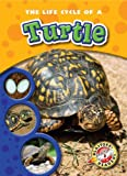 The Life Cycle of a Turtle, Colleen Sexton, 1600144527