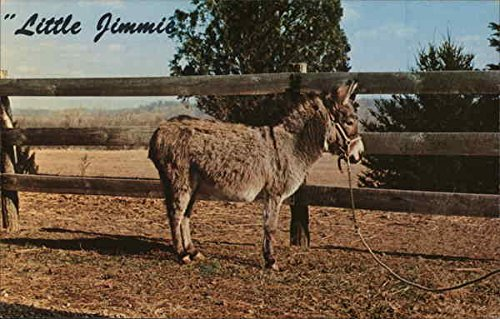 Little Jimmie, Billed as the World's Smallest Mule Other Animals Original Vintage Postcard from CardCow Vintage Postcards