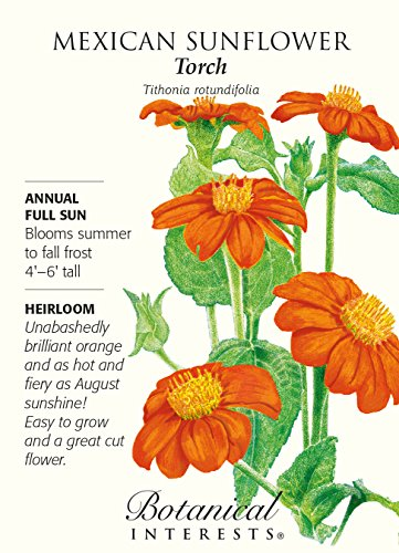 (Mexican Sunflower Torch Seeds - 500 mg - Annual)
