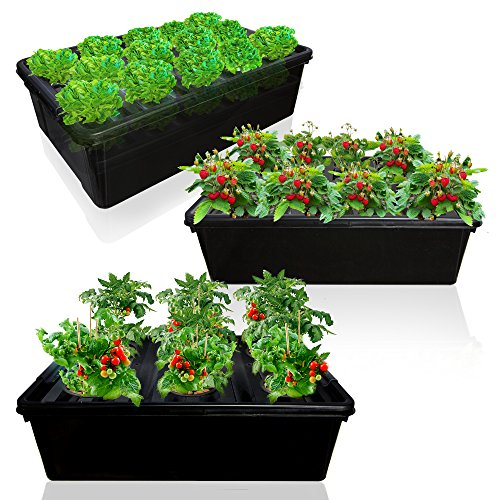 DWC Hydroponics System Growing Bundle - 3 Big Bucket with Air Pump, Large Airstones, up to 28 Plants - Complete Hydroponic Setup for Indoor Herbs, Seeds, Seedlings – by SavvyGrow (3 In 1 Bundle) by SavvyGrow