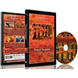 Nature DVD - Forest Seasons - Scenery From All Seasons from the Forest with Music and Nature Sounds