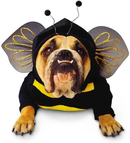 Bumblebee Dog Pet Pet Costume -