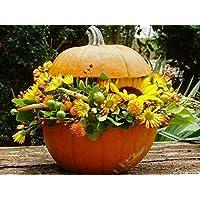 Seeds Package Not Plants: Pumpkin, O'Lantern, Kurbis, Citrouille, Squash, Cucurbita a
