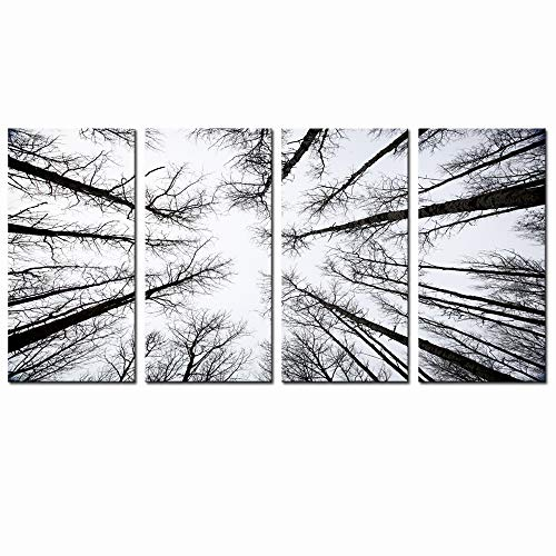 Live Art Decor - Black and White Forest Canvas Wall Art Low Angle View Aspen Trees Picture Print on Canvas,San Juan National Forest,4 Panels Framed Artwork for Modern Home Wall Decoration