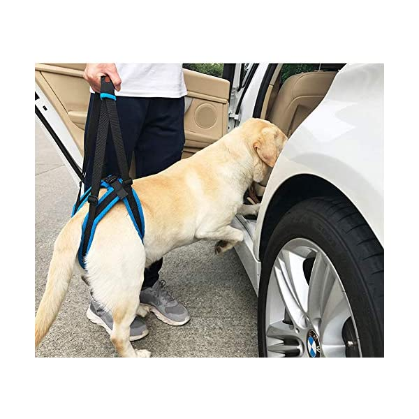 Tineer Dog Lift Harness for Back Legs Pet Support Harness Rear Sling Help Weak Legs Stand Up Support Balance Harness for… Click on image for further info. 6