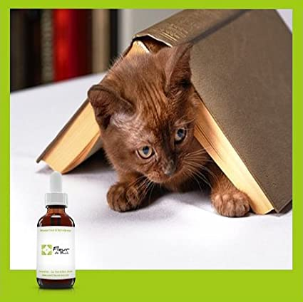 Fleurs de Bach Chat stressé un mélange qui va aider votre chat à se calmer  (30 ML)