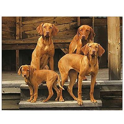 Simply-Calendar-Dogs-Mans-Best-Friend-2019-Wall-Calendar-105-x-18-Open