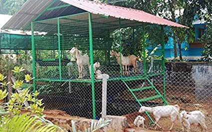 Plastic slatted Goat Flooring are Modern Method Used in Goat