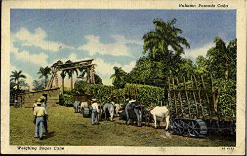 Weighing Sugar Cane Havana, Cuba Original Vintage Postcard - Havana Cane