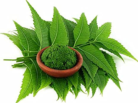 Image result for neem