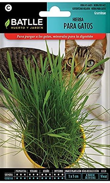 Semillas Aromáticas - Hierba para gatos - Batlle: Amazon.es: Jardín