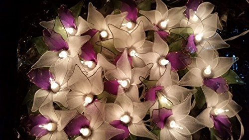 GaanZaLive36 Handmade 20 Romantic Orchid Flower Fairy String Lights Patio Wedding Party Vanity Kid Wall Lamp Floral Home Decor 3m (White (Cute Betty Boop Halloween Costumes)