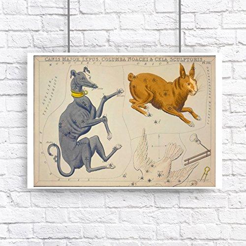 Star Constellation Rabbit Greyhound Vintage Style Art Poster Print Astronomy Dog Hare Bunny Grey