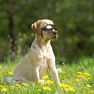 Enjoying DN Pet Dog Sunglasses For Dog Eyewear Protection Waterproof Dog Goggles UV Protection Cool Large Dog Glasses