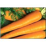 750 Imperator Carrot Seeds | Non-GMO | Fresh Garden Seeds