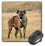 3dRose LLC 8 x 8 x 0.25 Inches Mouse Pad, Pete Oxford (mp_76151_1)