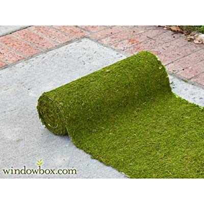 Preserved Green Moss Roll - 4 ft. : Plant Window Boxes : Garden & Outdoor