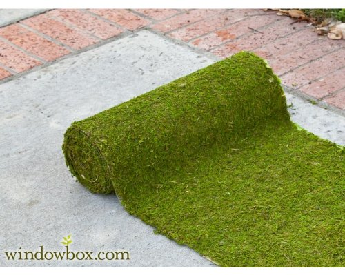 - Preserved Green Moss Roll - 4 ft.