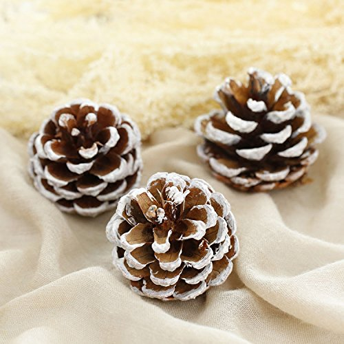 Astra Gourmet 15-Piece Snow Tipped Real Natural Dried Pine Cones for Potpourri, Bowl Fillers, and Crafting£¬Unscented (Large Acorn Covered Bowl)