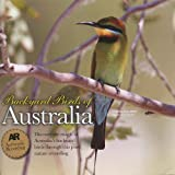 Featuring Pied Butcherbird Also Willy Wagtail, Yellow Honeyeater, Little Bronze-Cuckoo