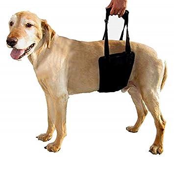 jky Arnés para Perros, fácil de Llevar, cómodo con Mango ...