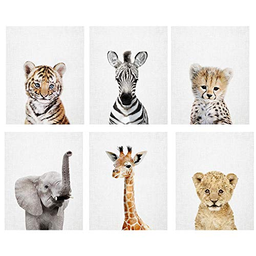 Baby Safari Animal Prints 8x10 (tx) - Set of 6 Adorable Furry Baby Animal Portraits - Tiger Cub, Zebra, Cheetah, Elephant, Giraffe, Lion Cub - Nursery Animal Wall Art, Nursery Decor Unframed Prints