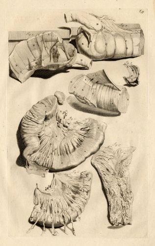 Antique Medical Print-INTESTINE-Cowper-Bidloo-1739
