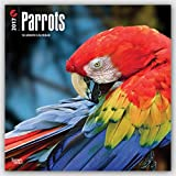 Parrots 2017 Square