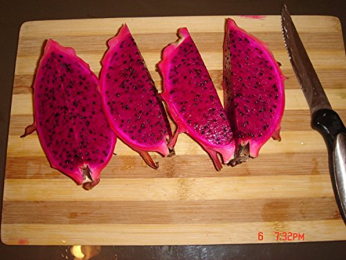 Dragon Fruit Cutting Red 12 Inch Cutting