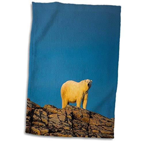 east urban home Indigo Canada, Nunavut Territory, Adult Polar Bear Standing Hand Towel from east urban home