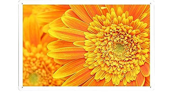Amazon.com: Planet Scene Poster - Orange Yellow Gerber Daisies Macro ...