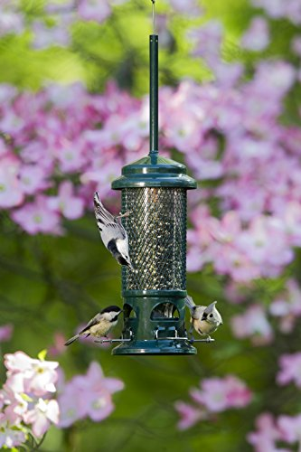 Squirrel-Buster-Standard-5x5x215-whanger-Wild-Bird-Feeder-with-4-Metal-Perches-13lb-Seed-Capacity