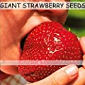 (SGS200 Za#026) Fruit Seeds 150pcs Super Giant Strawberry Perfume Bonsai Strawberry Fruit, Home Gardening