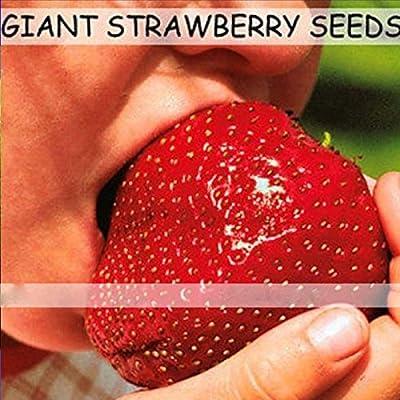 (SGS200 Za#026) Fruit Seeds 150pcs Super Giant Strawberry Perfume Bonsai Strawberry Fruit, Home Gardening