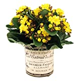 Creative Displays Kalanchoe in French-Themed Pot Faux Floral, Small, Yellow