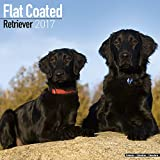 Flat Coated Retriever Calendar 2017 - Dog Breed Calendars - 2016 - 2017 wall calendars - 16 Month by Avonside