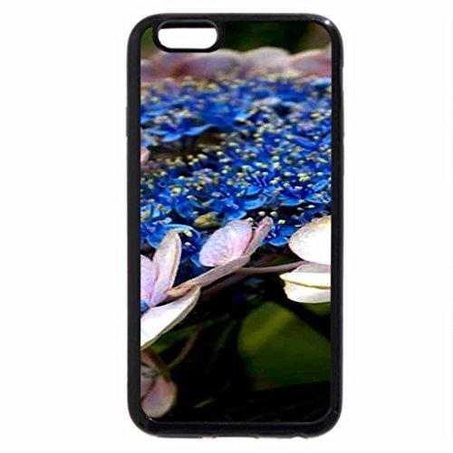 iPhone 6S / iPhone 6 Case (Black) Lace Cap Hydrangea