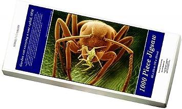 Media Storehouse Rompecabezas de 1000 Piezas de Hormigas de jardín Que Llevan un áfido de Rosa, SEM (9331653): Amazon.es: Juguetes y juegos