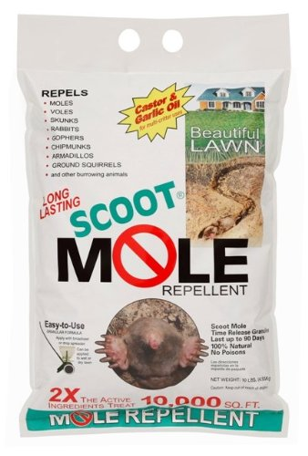Scoot Mole (Scoot Squirrel)