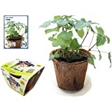 Grow Your Own Catnip, All-In-One Catnip Growing Kit, Complete Kit with Catnip Seeds, Coconut Fiber Pot and Soil Disk - Just Add Water (Catnip Kit)